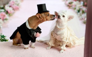 Husband-and-wife-Animal-Wedding_-300x188